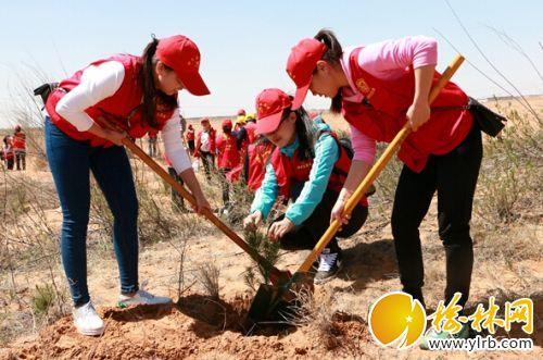 神木300余名志愿者植树千余棵