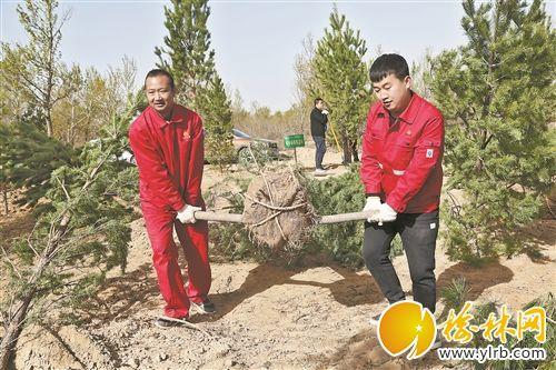靖边采油厂1200多人参加义务植树