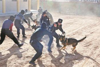 神木公安:警犬技术服务实战