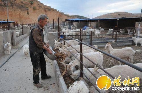 延家河村大力发展羊产业魏丽娟摄