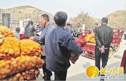 在武镇向贫困村发放马铃薯良种