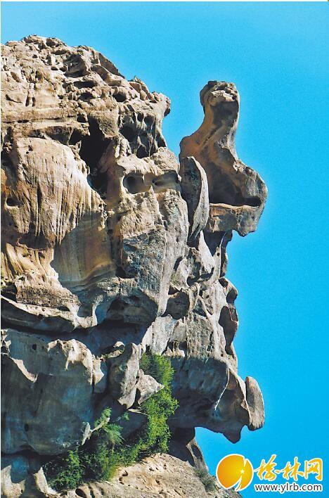 石壁爬山虎