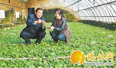 石光银在马铃薯良种繁育基地同工作人员一起查看种苗培育情况。