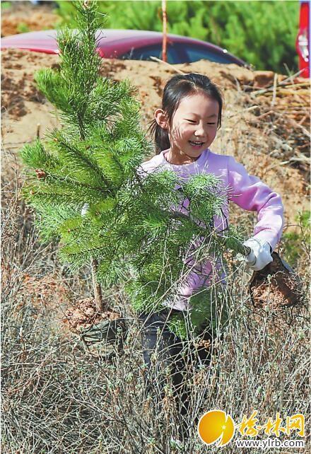义务植树从小做起