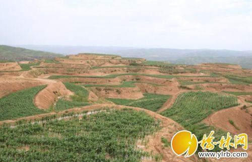 打造高标准农田 张三林摄
