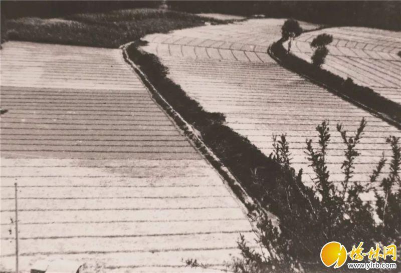 农业梯田。