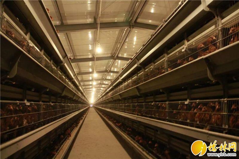 榆林春蕾绿色禽业有限公司140万只蛋鸡养殖基地。
