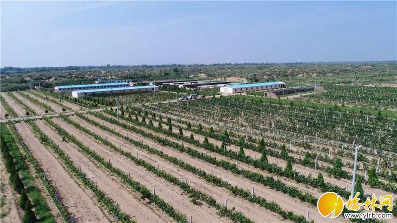 葡萄种植基地。