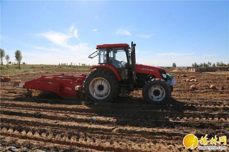 大型机械收割红薯。