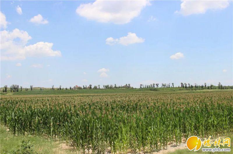 古塔镇罗硷村旱作农业示范园。