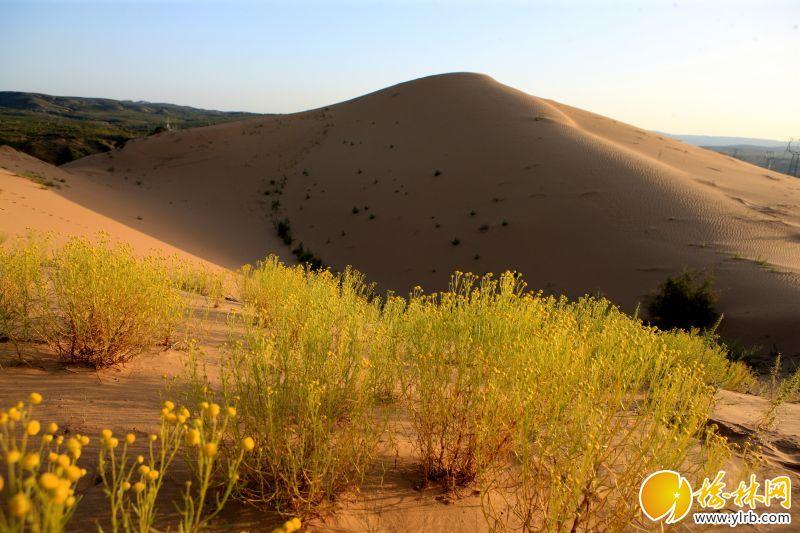 大漠风光  5P3H8981