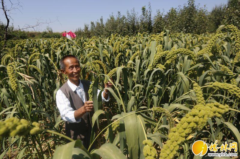 农民喜获丰收