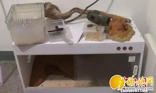 图为:保温箱内饲养着球蟒。 海宁警方供图 摄