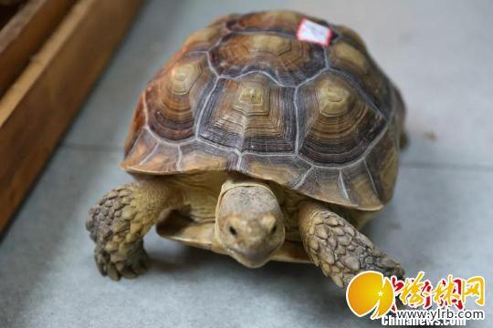 图为:濒危的龟类。 海宁警方供图 摄