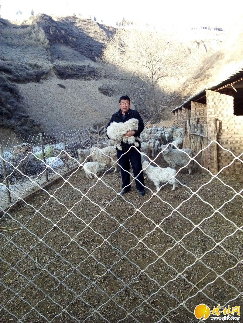 赵世宏在自家羊圈