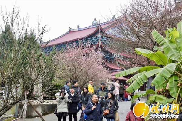 (春季美丽生态)(1)福州:古寺梅香
