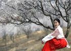 春风十里桃花路!吴堡最美杏花节,美成仙境!